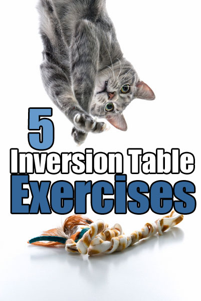 5 Inversion Table Exercises with Hanging Cat